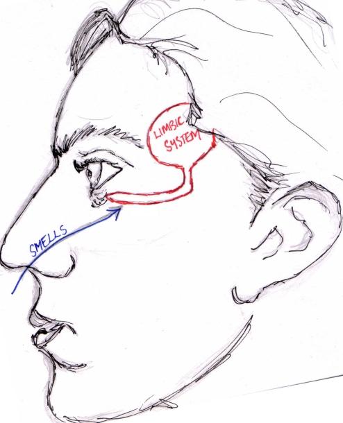 Nasal-Olfaction1